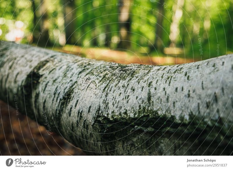 Tree trunk of a birch tree lying in the forest Nature Landscape Plant Spring Forest Growth Green May Saxony Sunbeam Birch tree Birch bark White Bright Lie