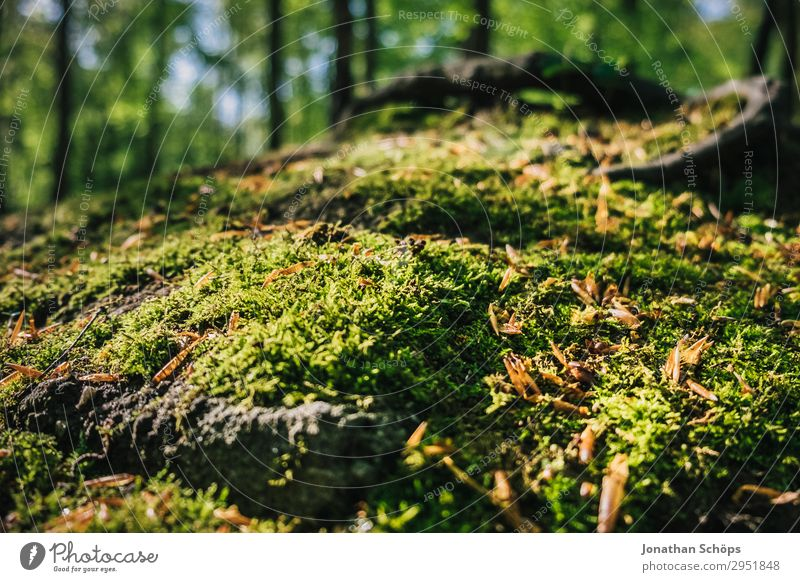 Moss in the forest close-up Nature Landscape Plant Spring Forest Growth Green May Saxony Carpet of moss Woodground Overgrown Soft Sunbeam Colour photo