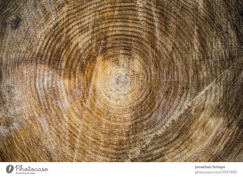 Texture Cross section of a tree Nature Landscape Plant Spring Forest Growth Brown May Saxony Tree Tree trunk Tree structure Circle Structures and shapes
