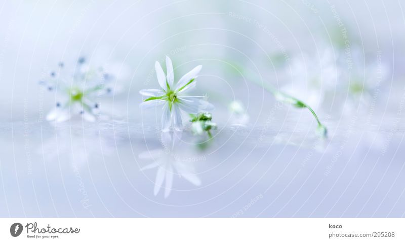 Blue Green Beautiful Water White Summer Plant Flower Leaf Relaxation Life Spring Blossom Air Natural Dream