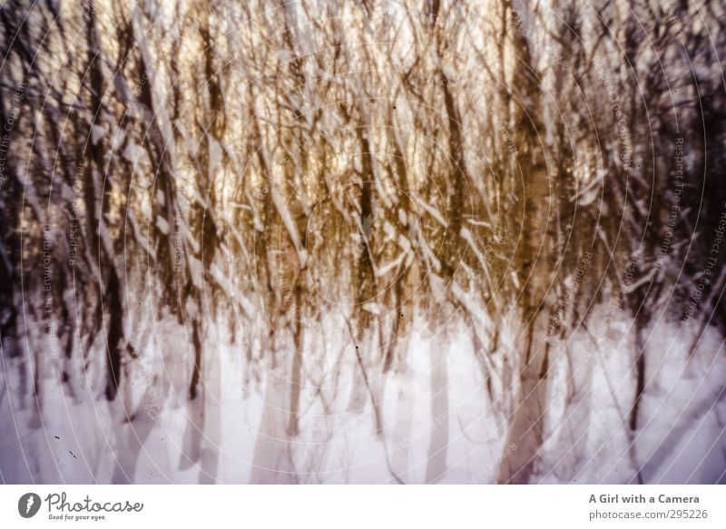 Nature Plant Tree Landscape Winter Forest Environment Wild Esthetic Uniqueness Double exposure