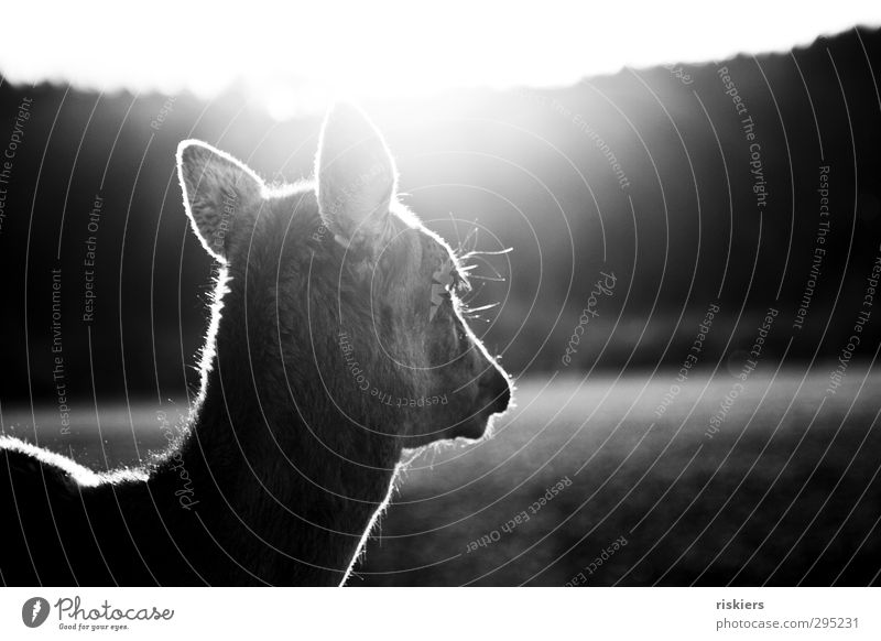 Sun Animal Calm Meadow Spring Natural Power Wait Beautiful weather Idyll Safety Curiosity Trust Brave Pride Willpower