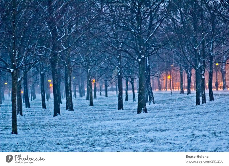 Nature Blue Tree Landscape Relaxation Forest Yellow Snow Lighting Moody Going Weather Authentic Illuminate Idyll Warm-heartedness