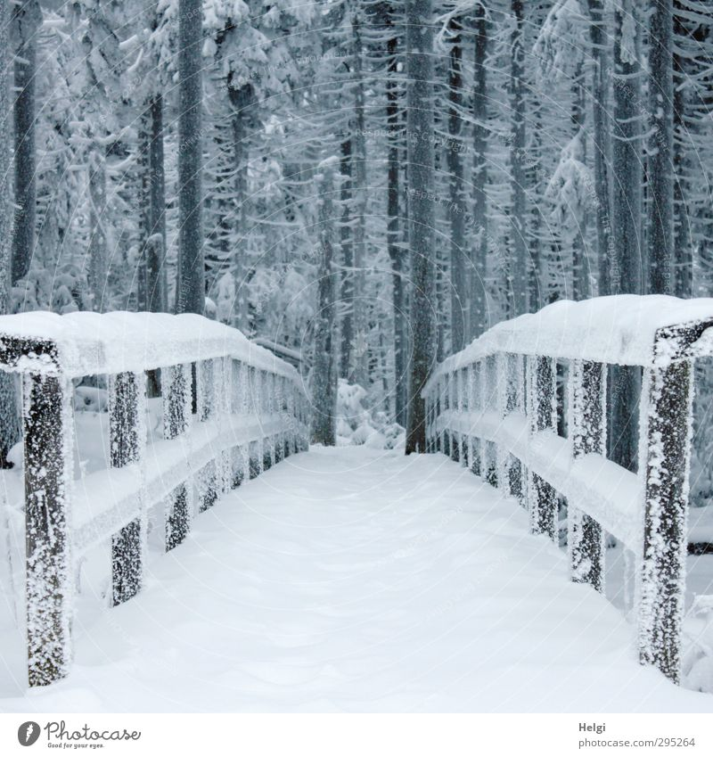 700 Transition... Vacation & Travel Tourism Trip Winter Snow Winter vacation Mountain Hiking Harz Brocken Environment Nature Landscape Ice Frost Tree Forest