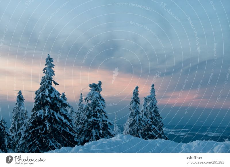 rest Environment Nature Landscape Plant Sky Clouds Sunrise Sunset Winter Ice Frost Snow Tree Forest Mountain Peak Snowcapped peak Cold Calm Fir tree