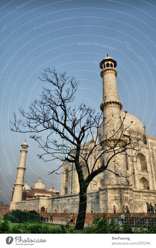 Taj Mahal Tree Agra Manmade structures Tourist Attraction Landmark Monument Past Colour photo Exterior shot Morning Worm's-eye view