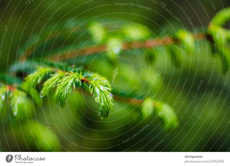 delicate nature Environment Nature Landscape Plant Elements Water Spring Summer Rain Tree Coniferous trees Coniferous forest Forest oybin Deserted Discover