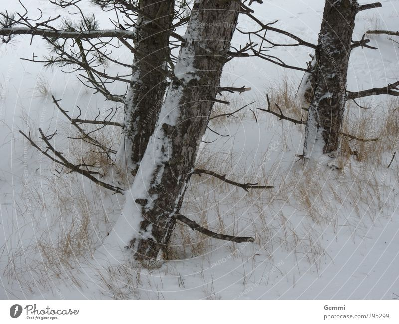 Winter in spring Environment Nature Landscape Plant Earth Sand Spring Weather Ice Frost Snow Snowfall Tree Beach North Sea Island Amrum Freeze Brown Yellow Gray