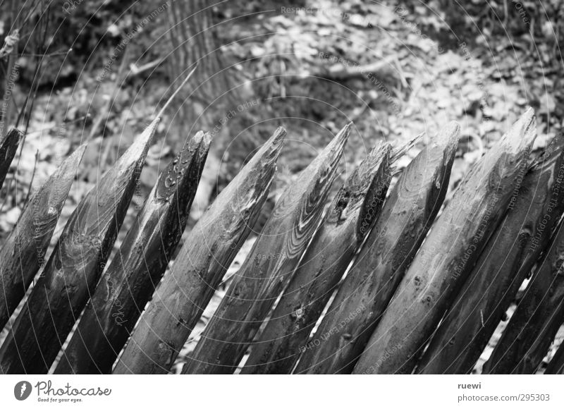 //////// Living or residing Garden Fence post Boundary line Real estate Gardening Landscape Autumn Forest Wood Old Firm Point Gloomy Gray Black White Safety