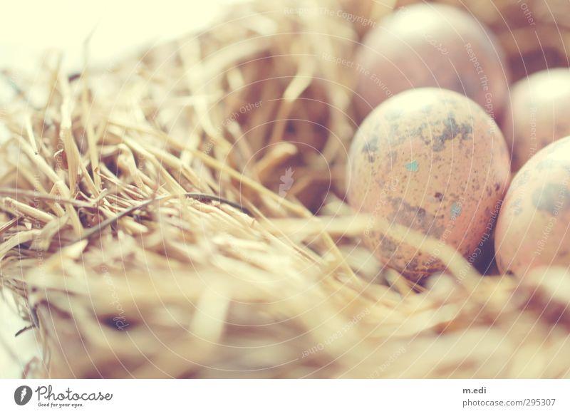 Brown Esthetic Farm animal Nest Hay Easter egg nest Quail's egg