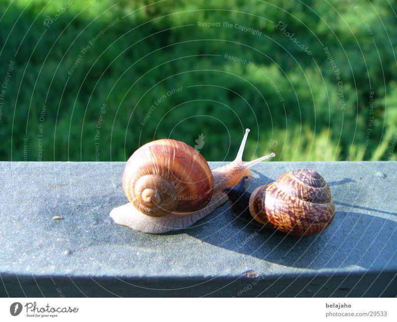 Snail meeting II Snail shell Encounter Feeler Slow motion Crawl Friendship Transport Date Handrail