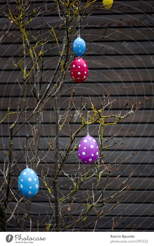 Happy E 2 Easter Blue Violet Red Easter egg Spotted Colour photo Exterior shot Deserted