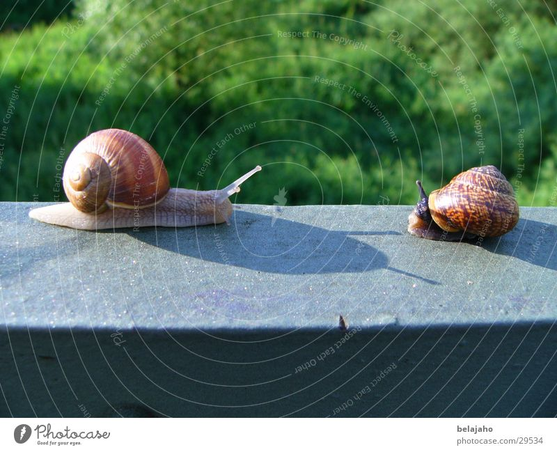 Friendship Transport Handrail Snail Agree Feeler Crawl Encounter Snail shell Slow motion