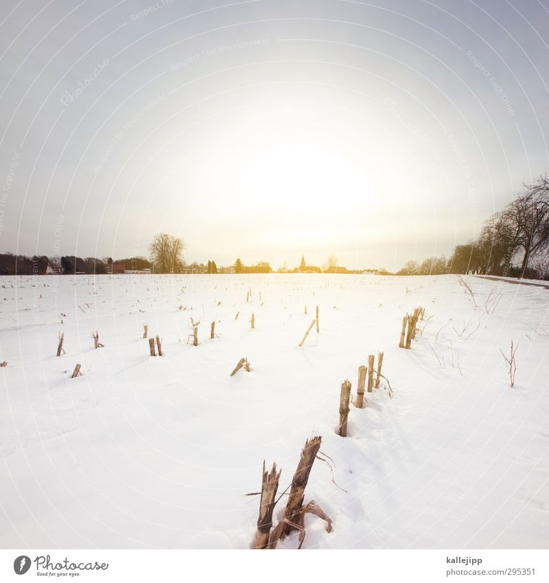 In March the farmer ... Agriculture Forestry Environment Nature Landscape Earth Cloudless sky Sun Sunrise Sunset Sunlight Spring Winter Climate Weather Ice