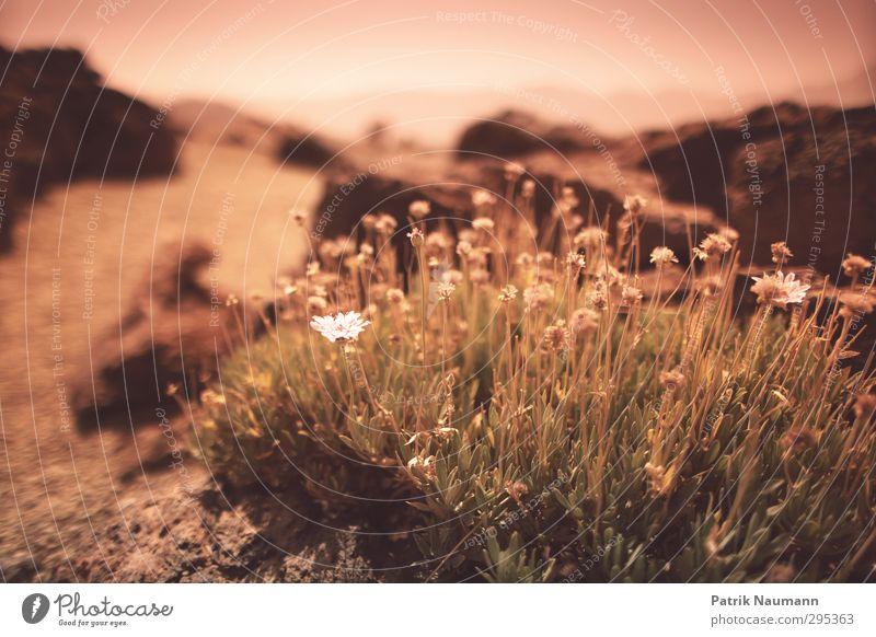 Sky Nature Summer Plant Sun Landscape Environment Mountain Grass Spring Blossom Sand Horizon Rock Beautiful weather Bushes