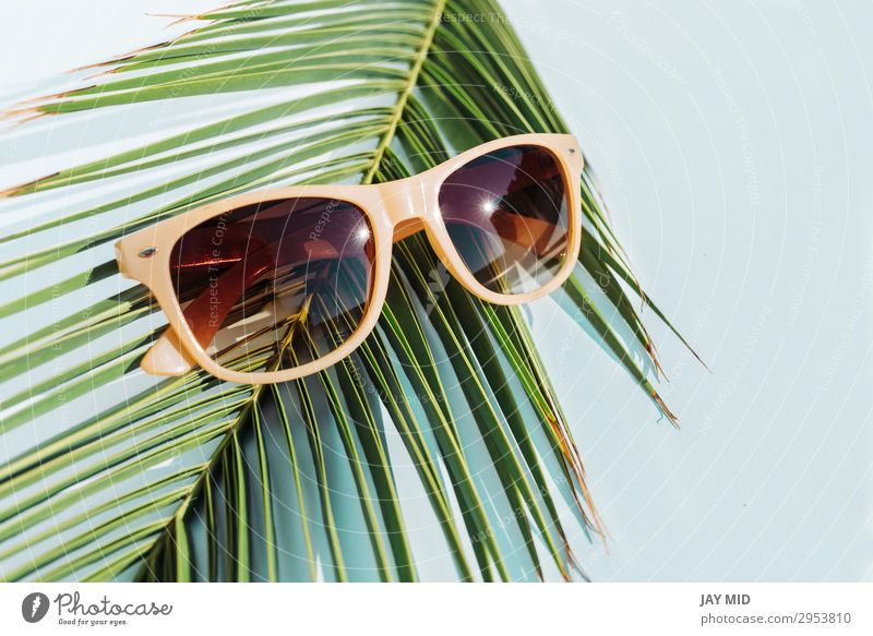 beige sunglasses on palm leaf, travel concept object Style Design Vacation & Travel Summer Sun Beach Fashion Accessory Sunglasses Plastic Hot Bright Modern