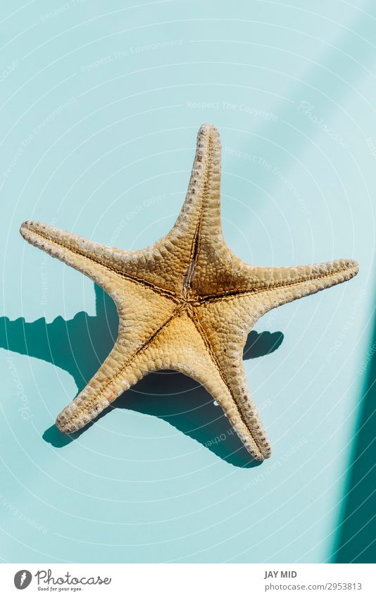 Starfish on turquoise bakground, tavel and summer concept Beautiful Life Relaxation Leisure and hobbies Vacation & Travel Summer Sun Nature Water Stars Beach