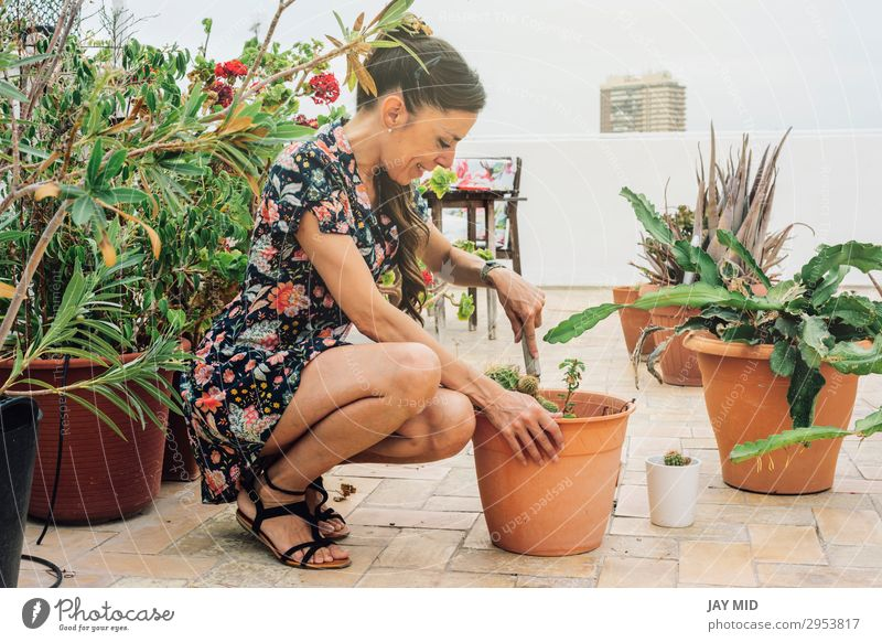 Woman gardener, planting cactus plant in a pot Pot Leisure and hobbies Summer Garden Work and employment Gardening Tool Adults Hand Nature Plant Earth Flower