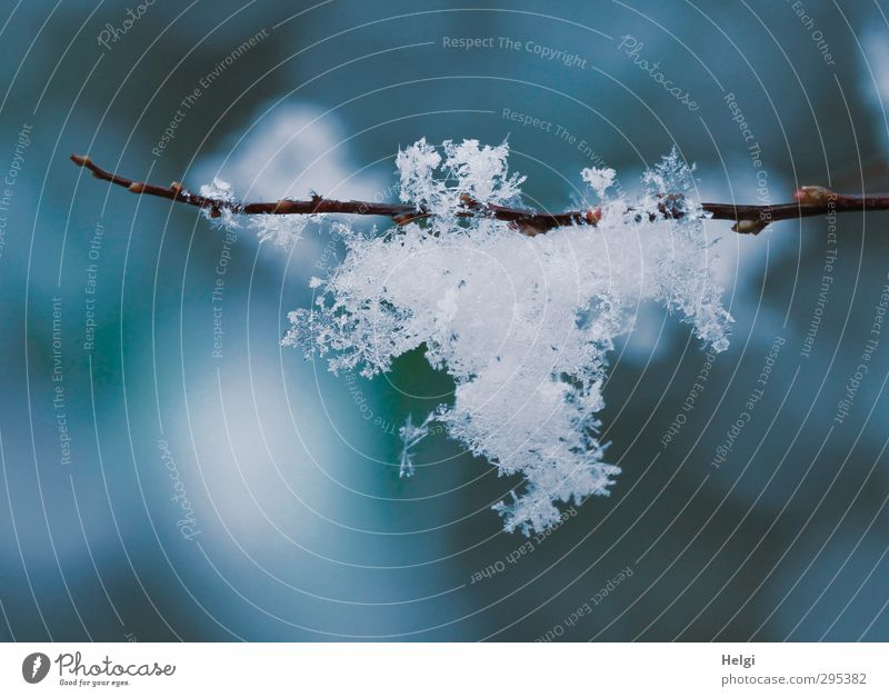 spring flakes... ;-) Environment Nature Spring Winter Ice Frost Snow Plant Twigs and branches Glittering Hang Esthetic Exceptional Fresh Beautiful Uniqueness