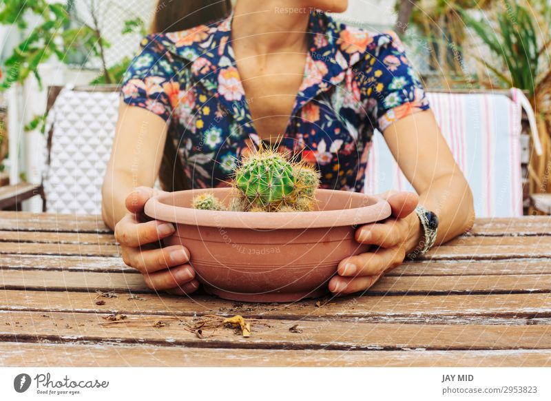 Closeup of a woman holding a pot of cactus in the terrace Pot Lifestyle Summer Garden Decoration Table Gardening Human being Woman Adults Hand 1 30 - 45 years