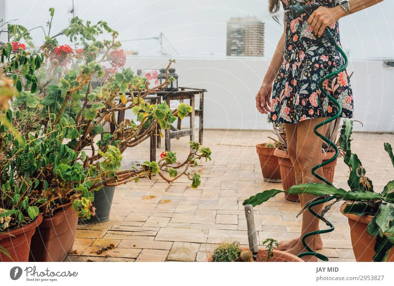 Woman in flowered dress watering plants with hose in summer- Lifestyle Beautiful Leisure and hobbies Summer Garden Work and employment Gardening Tool