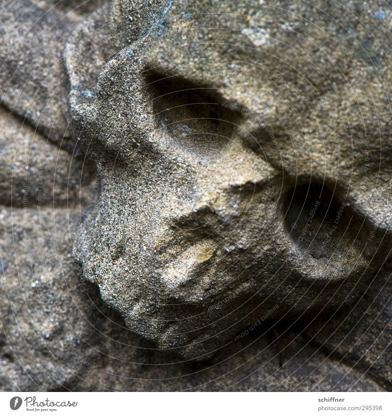 Old gravestones, look of death. Sign Hideous Broken Pain Sadness Decline Transience Death Harbinger of death Death's head Animal skull Stone Tombstone Grief