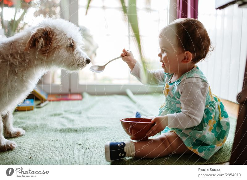 Child feeding dog with spoon Lifestyle Human being Baby Toddler Girl 1 1 - 3 years Animal Pet Dog Eating To enjoy Friendliness Happiness Together Happy Funny