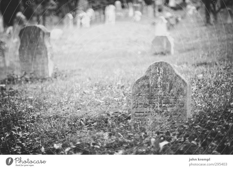 Old gravestones   Venezia II Venice Italy Cemetery Tomb Tourist Attraction Stone Characters Threat Famousness Dark Historic Compassion Peaceful Goodness