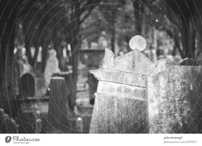 Old gravestones | Venezia V Venice Italy Old town Cemetery Tourist Attraction Stone Dark Creepy Historic Compassion Goodness To console Sadness Concern Grief