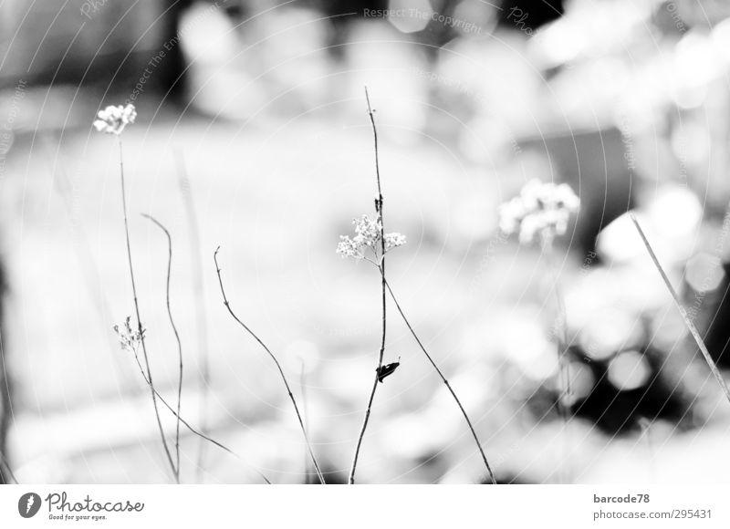 Nature Old White Plant Loneliness Flower Animal Black Senior citizen Sadness Movement Death Garden Dream Moody Bushes
