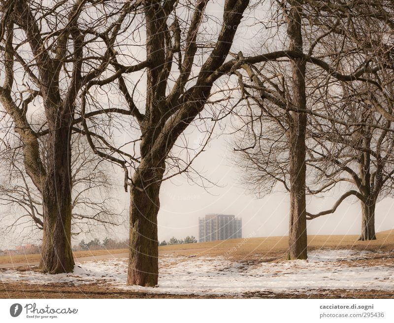 City Tree Loneliness Landscape Winter Environment Dark Meadow Snow Above Brown Park High-rise Future Gloomy Threat