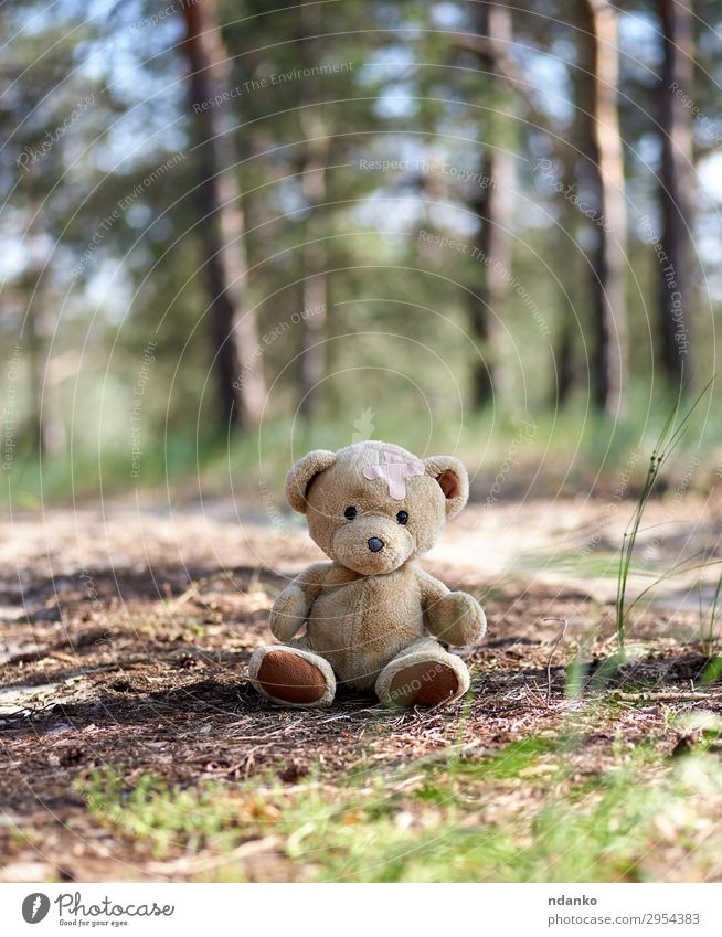 abandoned brown teddy bear Summer Nature Sand Park Forest Toys Doll Teddy bear Old Looking Sit Small Cute Soft Brown Friendliness Sadness Loneliness back Bear