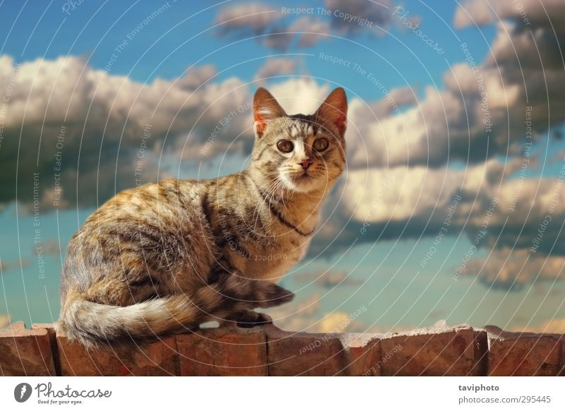 cat standing on the roof Face Nature Animal Elements Air Sky Clouds Storm clouds Fur coat Hair Pet Cat 1 Stand Small Cute Blue Brown Gray White cloudscape
