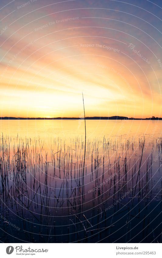 Sky Nature Water Plant Tree Sun Landscape Clouds Winter Environment Lake Illuminate Beautiful weather Idyll Bushes Lakeside