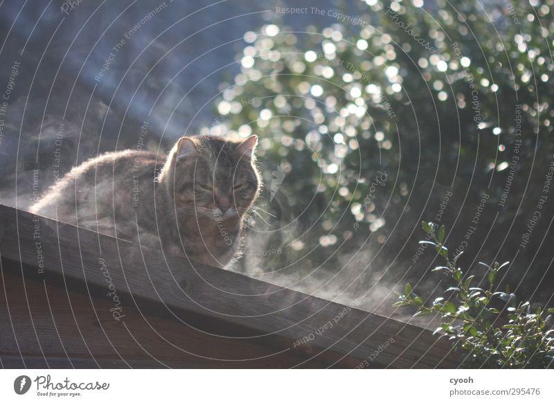 hmmm... Animal Pet Cat 1 Breathe Observe Touch Fragrance Illuminate Sleep Sit Dream Wait Fresh Cold Cuddly Wet Cute Soft Contentment Joie de vivre (Vitality)
