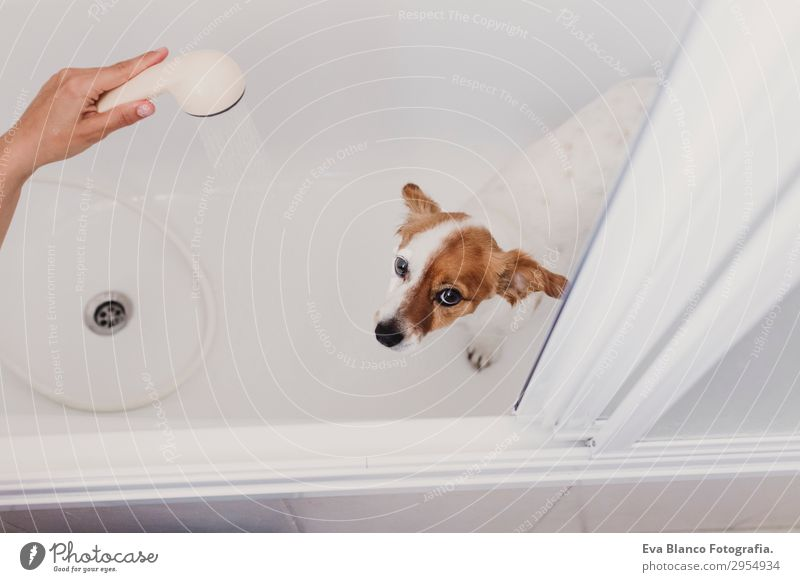 cute lovely small dog wet in bathtub ready for bath Joy Leisure and hobbies Bathtub Bathroom Feminine Young woman Youth (Young adults) Woman Adults Friendship