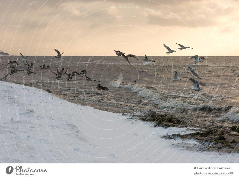 V Environment Nature Landscape Animal Elements Sand Sky Horizon Sun Winter Beautiful weather Snow Baltic Sea Ocean Bird Gull birds Group of animals Flock Flying