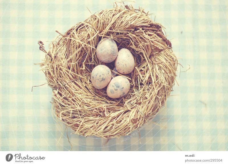 Happy Easter! Nest Egg Quail's egg Wood Beautiful Blue Colour photo Subdued colour Light