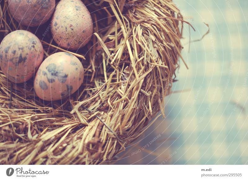 Happy Easter II Nest Egg Quail's egg Straw Beautiful Colour photo Interior shot Day