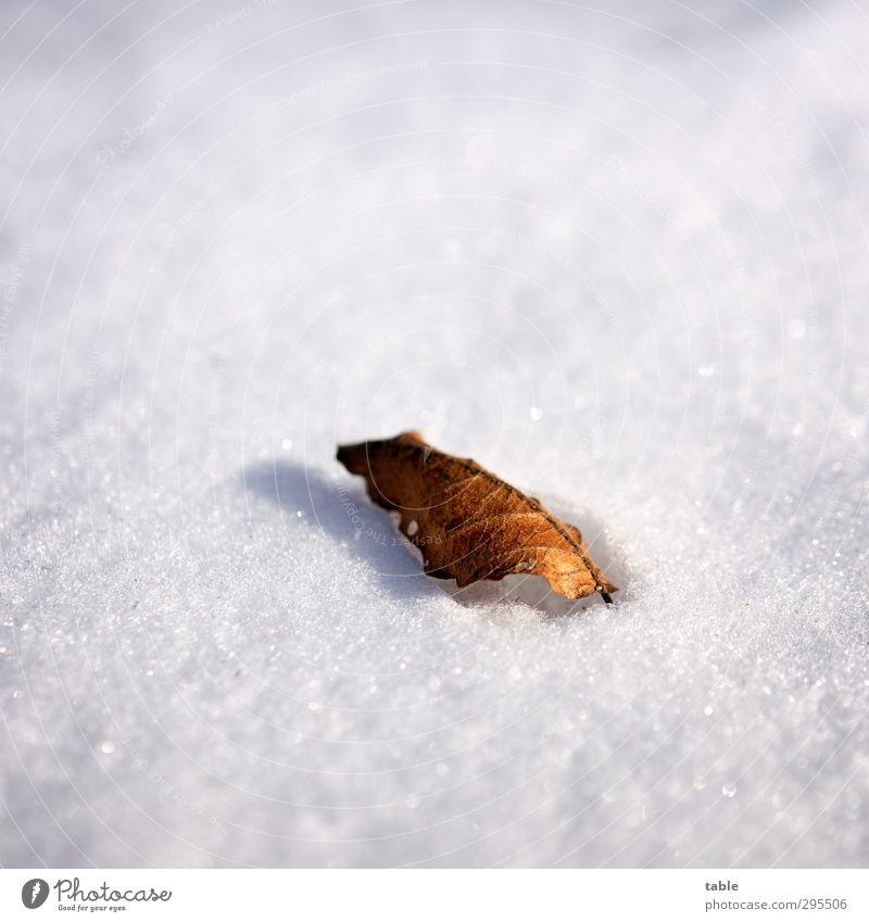 Nature Old White Plant Tree Loneliness Leaf Calm Winter Black Environment Dark Cold Snow Gray Bright