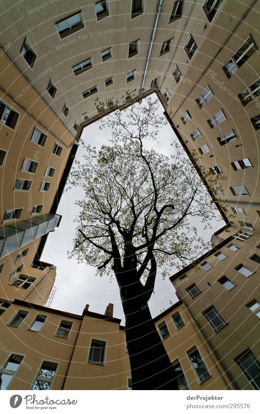 The window to the courtyard 11 Environment Nature Sky Spring Plant Tree Capital city Downtown Deserted House (Residential Structure) Manmade structures Building