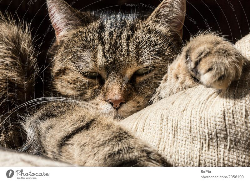 lazy cat Cat House (Residential Structure) Relaxation Animal Face Lifestyle Sadness Emotions Moody Leisure and hobbies Dream Lie Elegant Happiness Observe Sleep
