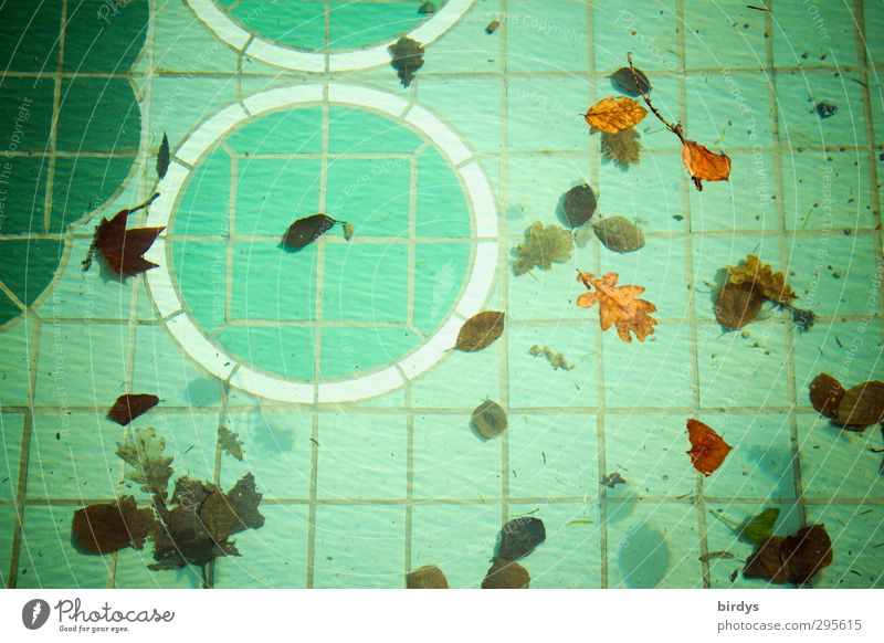 swimming pool Swimming pool Water Leaf Autumn leaves Ornament Swimming & Bathing Esthetic Authentic Brown Green Leisure and hobbies Nature Change Above water
