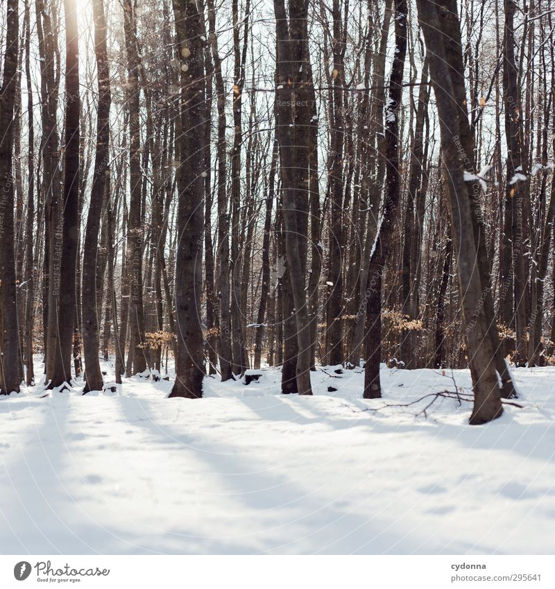 A winter day Harmonious Well-being Relaxation Calm Trip Adventure Winter vacation Hiking Environment Nature Sun Beautiful weather Ice Frost Snow Tree Forest