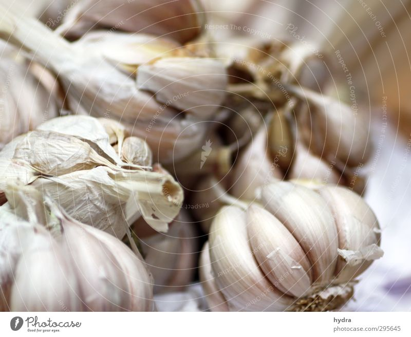 Market observation: Garlic Food Vegetable Herbs and spices Garlic bulb Clove of garlic Nutrition Eating Organic produce Vegetarian diet Slow food Healthy