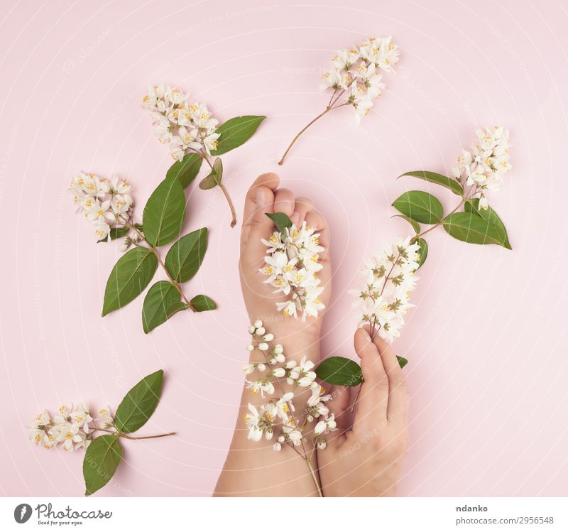 female hands and pink small white flowers Woman Human being Nature Youth (Young adults) Summer Plant Beautiful White Hand Flower Relaxation Leaf 18 - 30 years