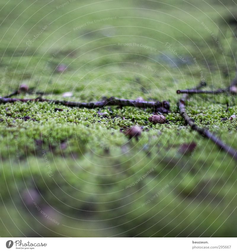 a green one away. Agriculture Forestry Environment Nature Landscape Earth Moss Garden Park Meadow Deserted Ruin Places Cone Twig Twigs and branches Branch Wood