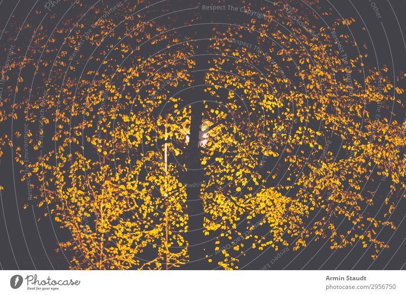 nocturnal tree Design Environment Full  moon Tree Park Dark Gloomy Moody Loneliness Eternity Street lighting Light Lighting Silhouette Leaf Black Illuminate