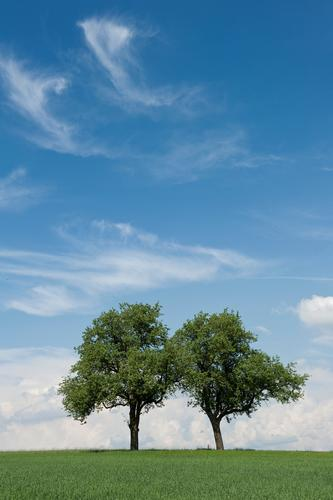 better together Environment Nature Landscape Plant Elements Sky Clouds Horizon Spring Climate Beautiful weather Warmth Tree Grass Foliage plant