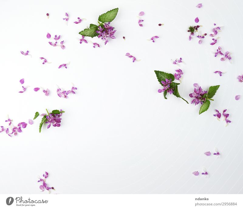 pink small flowers and green petals Nature Summer Plant Colour Beautiful Green White Flower Leaf Blossom Natural Fashion Pink Design Bright Modern